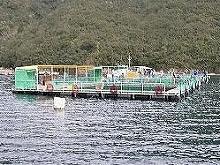 海上釣釣り堀 泰盛丸